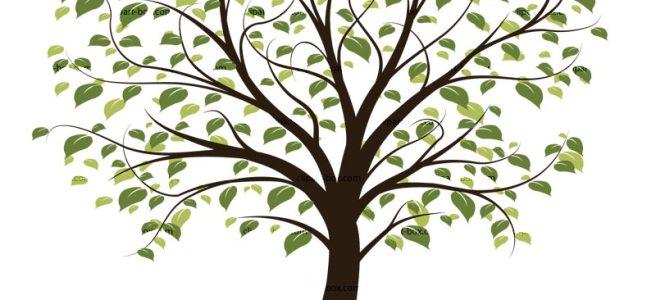 Genealogy Societies | Genealogy In Georgia